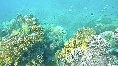 Photograph - Coral by Debbie Cundy
