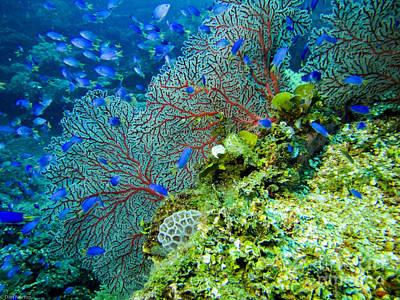 Achieving - Coral in Truk by Dan Norton