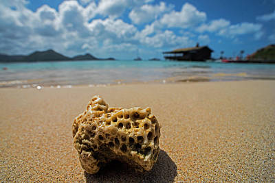 Photograph - Coral On Gros Islet Beach Saint Lucia Caribbean by Toby McGuire
