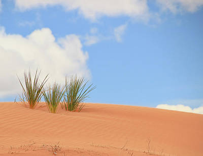 Photograph - Coral Pink Sand Dunes State Park # 2 by Allen Beatty