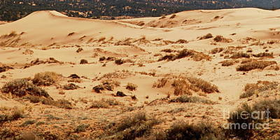 Photograph - Coral Pink Sand Dunes by Tim Richards