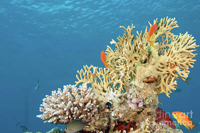 Coral Reef Eco System Art Print by Hagai Nativ