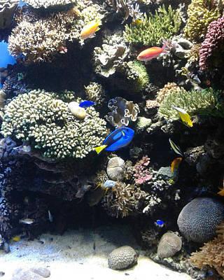 Wall Art - Photograph - Coral Reef by Helen Krummenacker