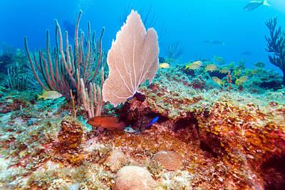Aretha Franklin - Coral reef near Cayo Largo by Rostislav Ageev
