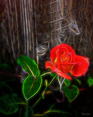 Photograph - Coral Rose Electrify by Anna Louise