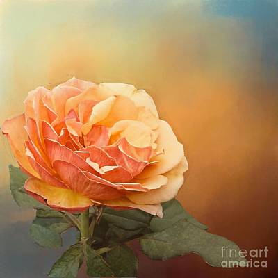 Photograph - Coral Rose With Scattered Sunshine by Janette Boyd