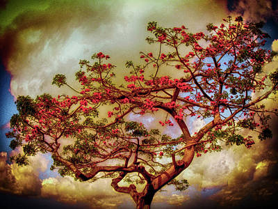 Photograph - Coral Tree by Joseph Hollingsworth