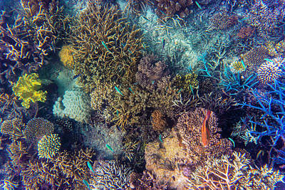 Photograph - Corals by Judith Barath