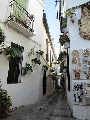 Photograph - Cordoba Old Street With Plants Surrounding The Wrought Iron Windows Spain by John Shiron