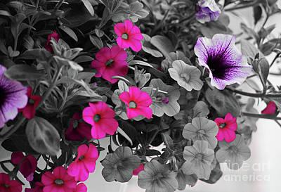Coreopsis And Petunias Art Print