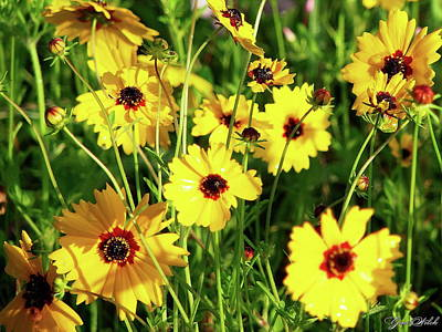 Mannequin Dresses Rights Managed Images - Coreopsis II Royalty-Free Image by Gina Welch