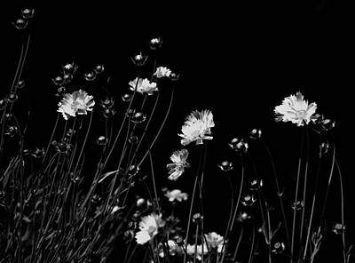 Photograph - Coreopsis by JGracey Stinson