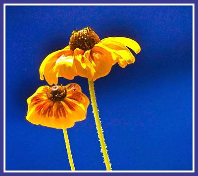 Photograph - Coreopsis by Sherri Meyer