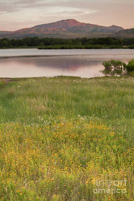 Photograph - Corepsis Blooming At The Quanah Parker Lake by Iris Greenwell
