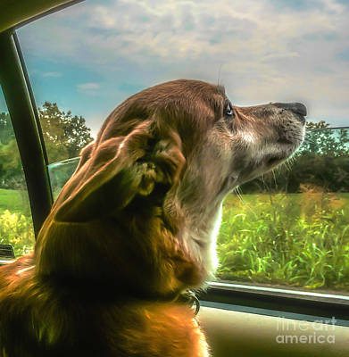 Photograph - Corgi  Dog  Taking It All In  by Peggy Franz