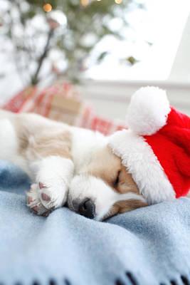 Sleepy Head Photograph - Corgi In Santa Hat Sleeping by Gillham Studios