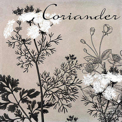 Monochrome Painting - Coriander Flowering Herbs by Mindy Sommers