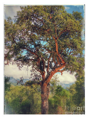 Photograph - Cork Oak by Ivan Gomez