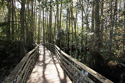 Photograph - Corkscrew Swamp 697 by Michael Fryd