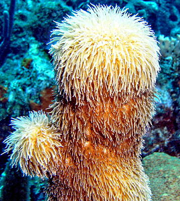 Corky Sea Finger Coral - The Muppet Of The Deep Art Print by Amy McDaniel