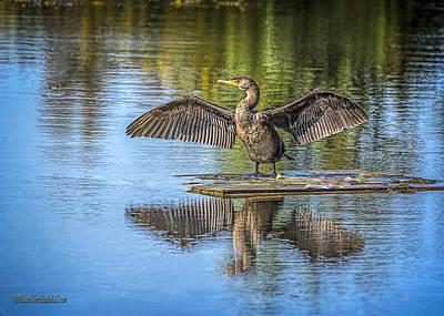 Cormorant Photograph - Cormorant Air Dry by LeeAnn McLaneGoetz McLaneGoetzStudioLLCcom