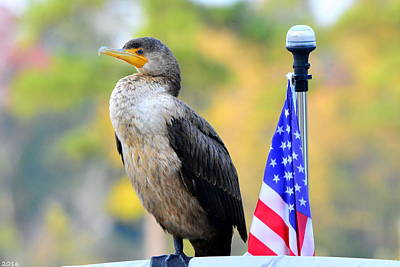 Photograph - Cormorant At Attention by Lisa Wooten