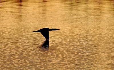 Photograph - Cormorant At Sunrise by Debbie Oppermann