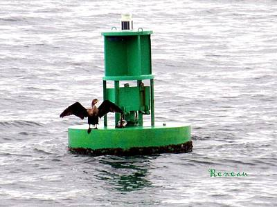 Photograph - Cormorant Buoy by Sadie Reneau
