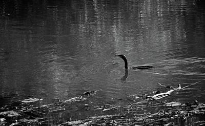 Photograph - Cormorant Bw#f6 by Leif Sohlman