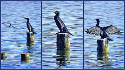 Photograph - Cormorant Collage by Dorothy Berry-Lound