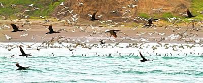 Frenzy Photograph - Cormorant Flight In Frenzy by Gus McCrea