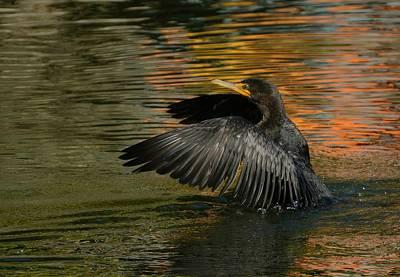 Photograph - Cormorant In Autumn by Fraida Gutovich