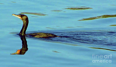 Photograph - Cormorant Reflections by D Hackett