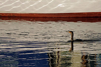 Photograph - Cormorant Reflections by Inge Riis McDonald
