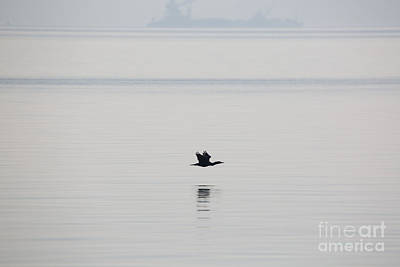 Glassy Wing Photograph - Cormorant River Peace by Rachel Morrison