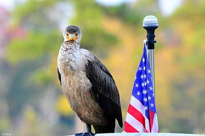 Photograph - Cormorant Standing Proud by Lisa Wooten