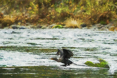 Photograph - Cormorant Taking Off by Belinda Greb