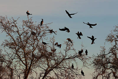 Photograph - Cormorant Tree by Kathleen Bishop