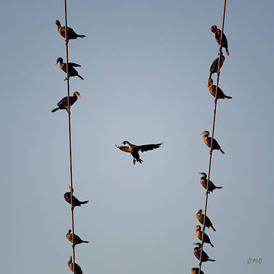 Photograph - Cormorants At Twilight by David Gordon