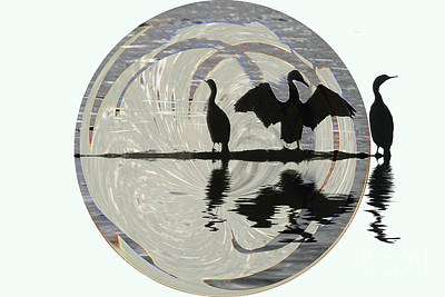 Photograph - Cormorants by Elaine Hunter