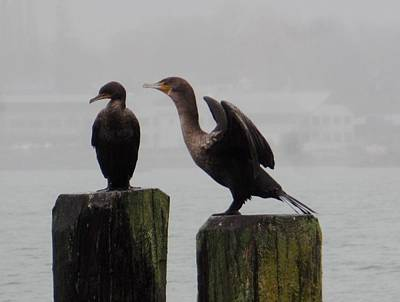 Photograph - Cormorants In Bellingham by Karen Molenaar Terrell