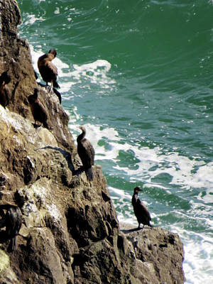 Photograph - Cormorants by Jacqueline  DiAnne Wasson