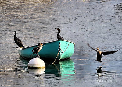 Photograph - Cormorants by Janice Drew