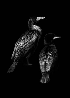 Mixed Media - Cormorants by Joseph Hollingsworth