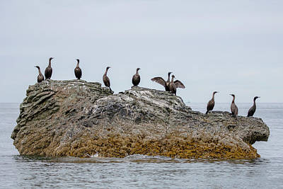 Photograph - Cormorants On A Rock by Gloria Anderson