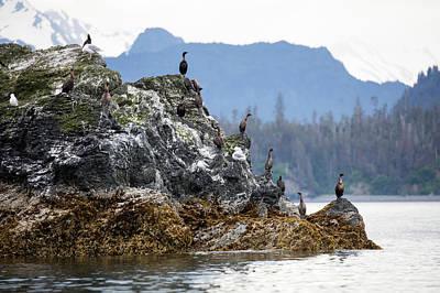 Photograph - Cormorants On The Edge by Gloria Anderson