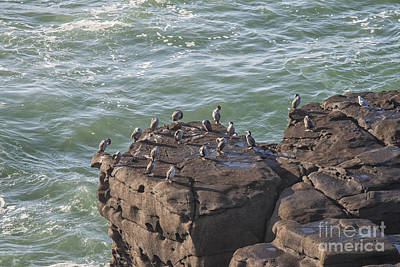 Photograph - Cormorants Standing On Cliffs by Patricia Hofmeester