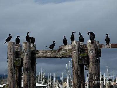 Photograph - Cormorants by Ida Eriksen