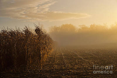 Photograph - Corn by David Arment