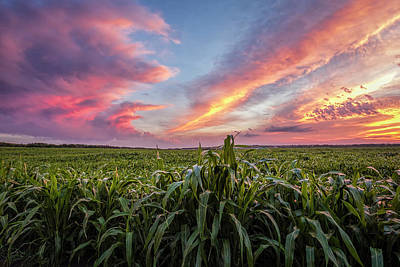 Photograph - Field At Sunset by Scott Bean